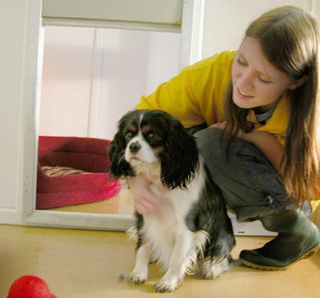 Fha Service Dog Lease Rules